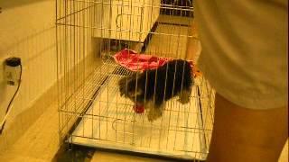 Dog training Singapore - Having puppy/ dog's toilet training problems?