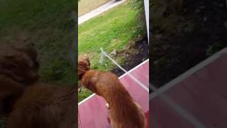 Doggo is thirsty af