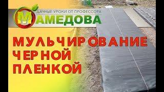 видео: Мульчирование черной пленкой.