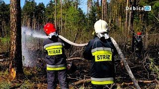 Pożar lasu w Lipinach