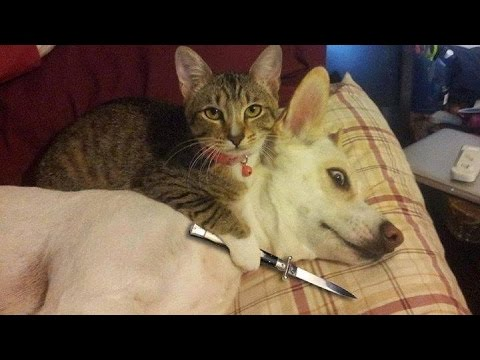 Thumbnail: Funny Cats vs Dogs Compilation
