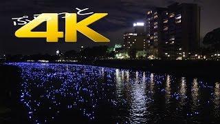 岡崎市 泰平の祈り【4K】