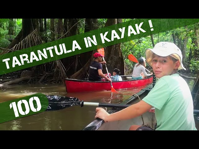 Tarantula in Kayak on Jungle Adventure and Crazy Suriname Immigration Check In Ep 100