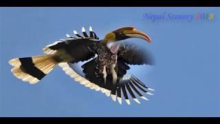 Beautiful Birds Found In Nepal | Birds Of Nepal |