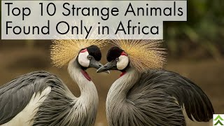 Top 10 Strange Animals Found Only in Africa