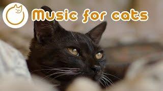 Музыка для кошек: кошачья музыка, чтобы помочь вашей подавленной кошке чувствовать себя лучше!