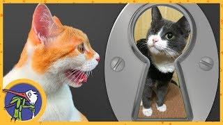 Вторая перевязка. Рыжик хочет познакомиться с кошечкой