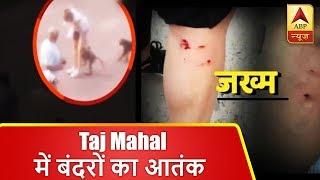 ताजमहल में बंदरों का आतंक, पर्यटकों पर कर रहे हमला | ABP News Hindi