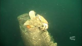 Dive on the German U-Boat UB75