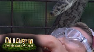 Bushtucker Trial: The Snakes R High, is Toff Tough Enough? |...