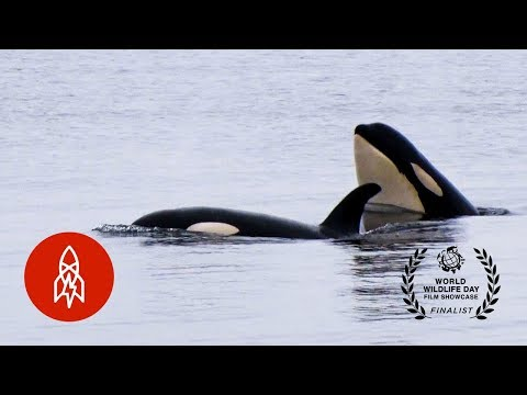 Radio Free Orca: A Broadcast for World Peace