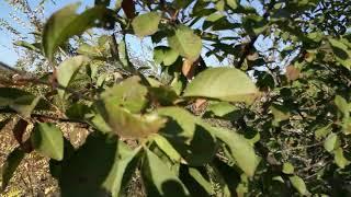 Юра Гетьманець Посадил деревья