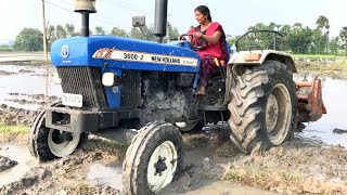 Village Girl vs New Holland 3600-2 Tractor Demo with 5 Tyne cultivator