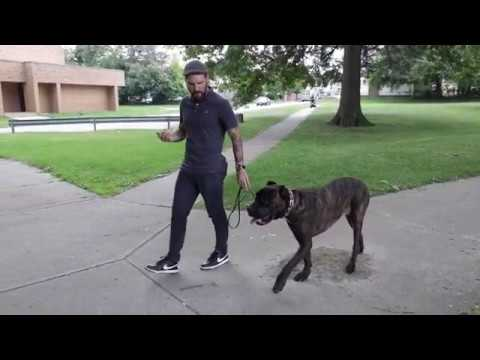 Teaching Your Dog To Walk Behind You With An Ecollar