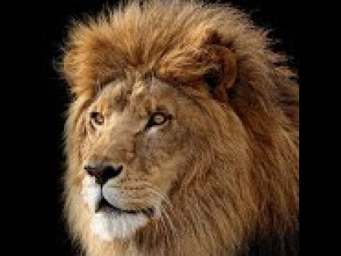 HOUSE OF JUDAH AND ISRAEL (the understanding)