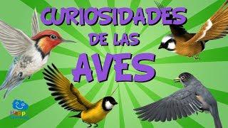 Curiosidades de las aves  Videos Educativos para Nios