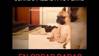 El perro porno grafico