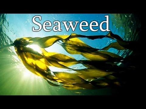 """Seaweed"" Creepypasta"
