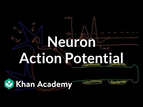 Neuron action potential description | Nervous system physiology | NCLEX-RN | Khan Academy
