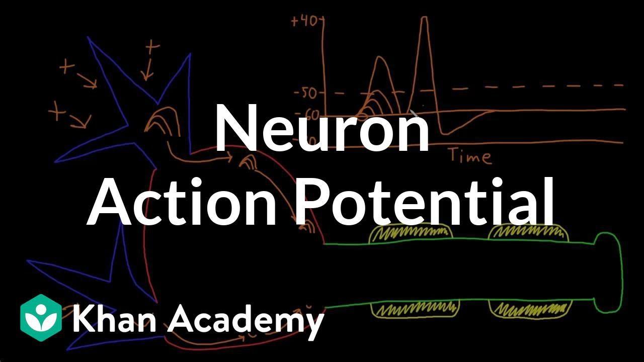 Neuron action potential description (video) | Khan Academy