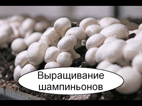 Разведение червей в домашних условиях: инструкция для
