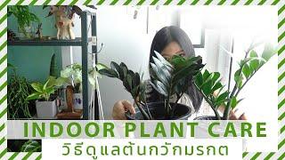 วิธีการดูแลต้นกวักมรกต ต้นไม้ในร่มเลี้ยงง่าย ต้นไม้ปลูกในห้องได้