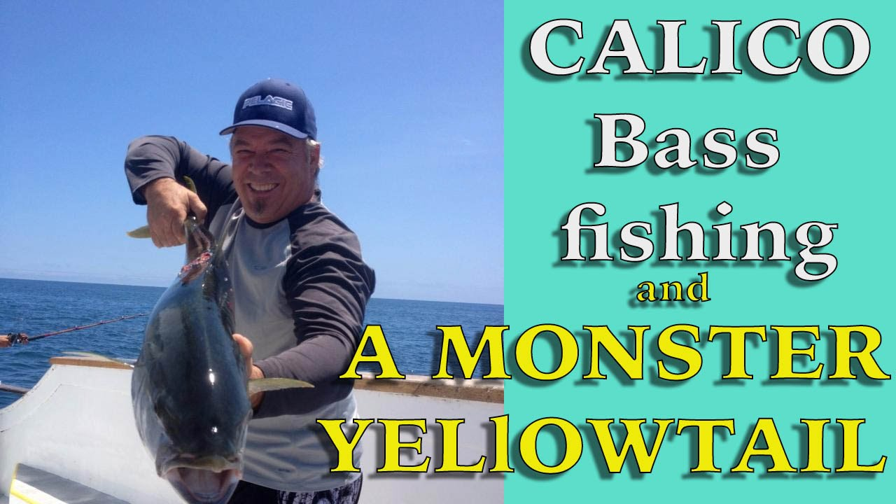 Calico bass fishing on the gentleman cisco monster for Cisco s sportfishing fish count