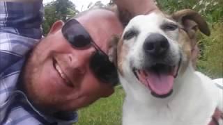 Sad Dog Video You Are My Sunshine