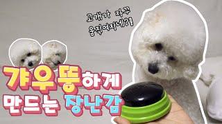 강아지? 갸우뚱❓하게 만드는 장난감?
