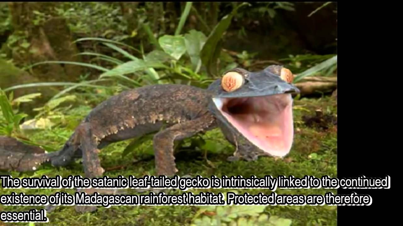 Top 10 New Discovered Animal Species 2015 - YouTube