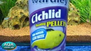Сухой корм для аквариумных рыб • Wardley Ciclid Floating Pellets(http://aqa.com.ua • Аквариумные и Зоо Товары ♥ Зоомагазин АКВА - Киев., 2011-09-24T15:38:42.000Z)
