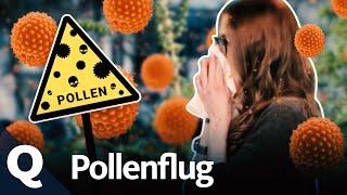 Weshalb Pollen nun länger und stärker fliegen | Quarks