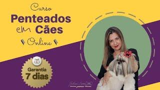 Curso Penteados em Cães Online - 100% Online, com CERTIFICADO