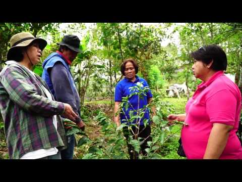 Piloting of Arabica Coffee Rooted Cuttings as Plant Materials in the Highlands Segment I&II