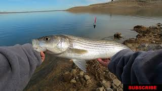 Late Winter Striped Bass Fishing at San Luis Reservoir 2 23 2021