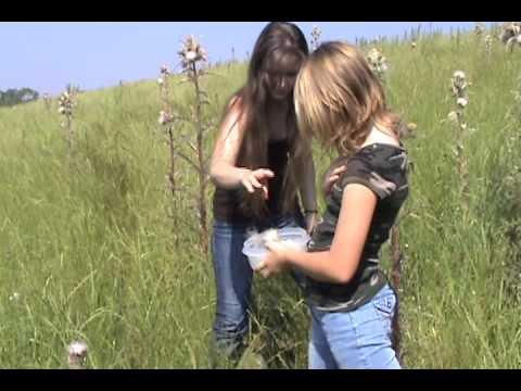 Identifying and Harvesting Wild Thistle
