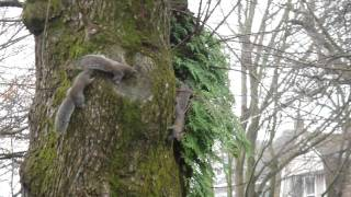 Epic Squirrel Fight (official)
