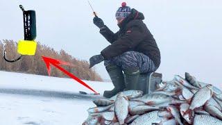 Зимняя рыбалка 2019 2020 Плотва на сырный кубик Безмотылка рулит