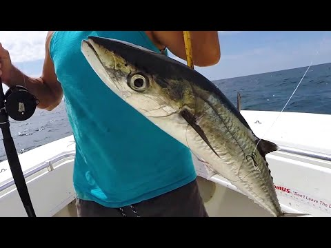 Catching Bait Deep And Secret Tips For Catching Kingfish
