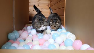 ボールロードとねこ。-Balls road and Maru&Hana.-