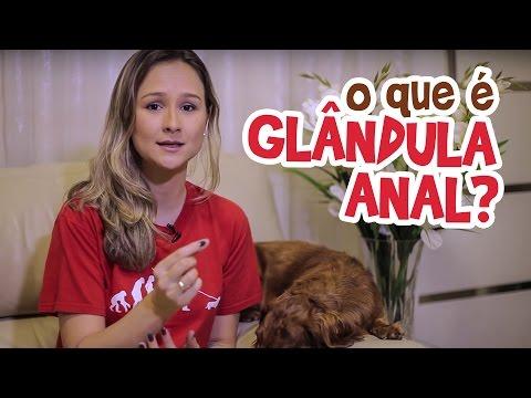 Ju Almeida - O que é Glândula Anal?