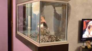 Аквариум своими руками.(Процесс изготовление аквариума (200л) в домашних условиях., 2014-02-05T18:45:04.000Z)