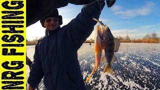 Открылись по окуню в 2018   Зимняя рыбалка