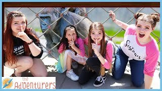 Ultimate Sardines Hide and Seek At The Zoo / That YouTub3 Family I The Adventurers