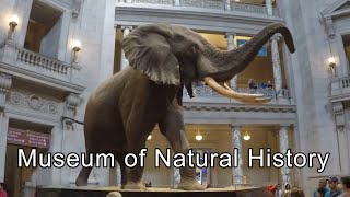 Smithsonian Museum of Natural History Video Tour | Washington DC, USA