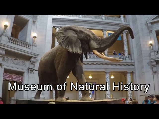 Smithsonian Museum of Natural History Video Tour   Washington DC, USA