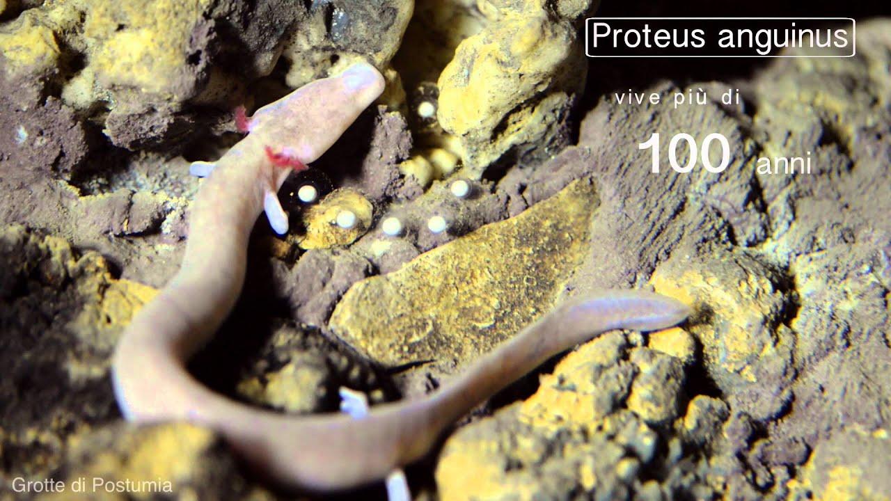 Grotte di Postumia (Slovenia): curiosità e informazioni ...