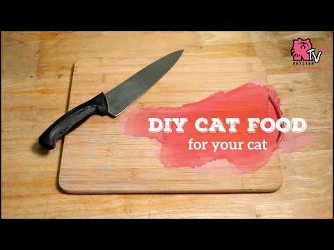 How to make homemade cat food easy
