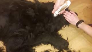 Мощные машинки для стрижки собак и кошек на сайте TopTerrier.ru по низким ценам