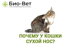 У Кошки Сухой Нос - Она Больна?&Почему у Кошки Сухой Нос.Ветклиника Био-Вет